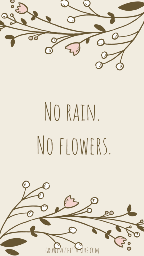 Inspirational Quote - No rain. No flowers. Growing The Tuckers