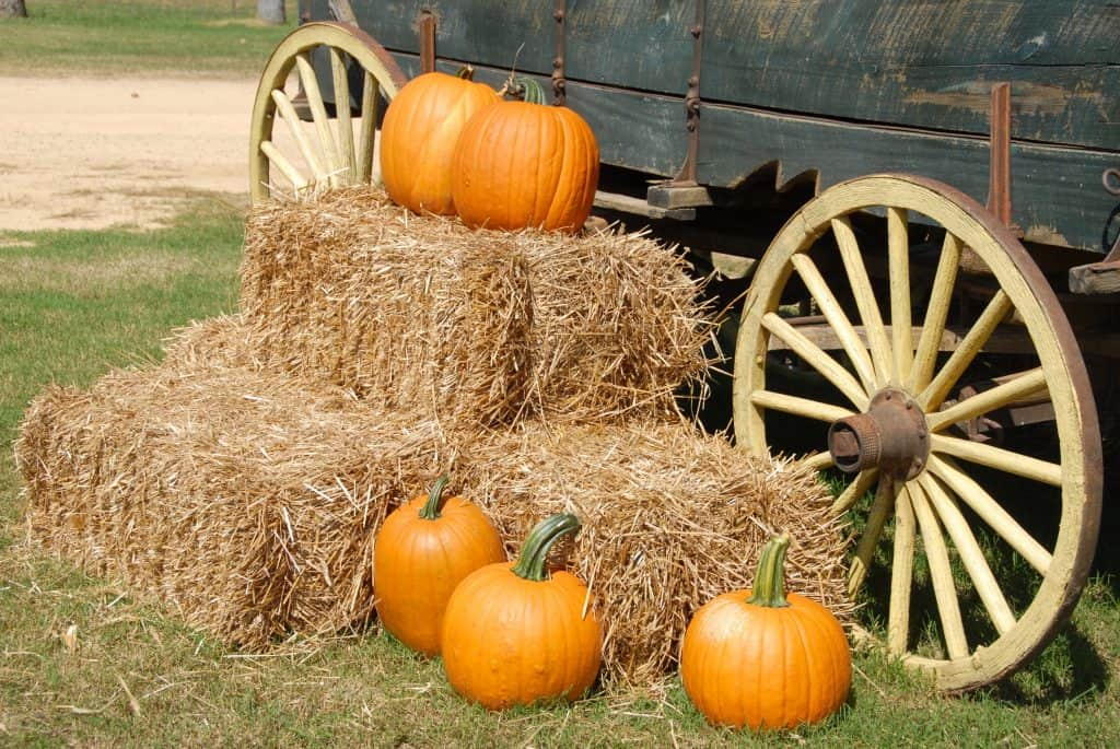 Fall pumpkins and hay